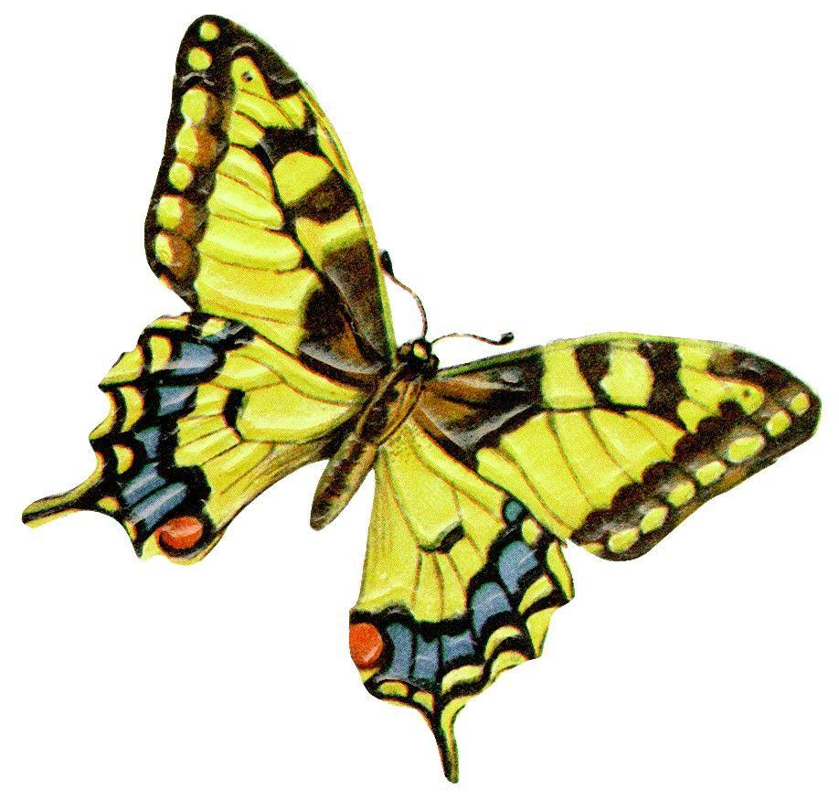 Butterflies Free Clip Art Collection