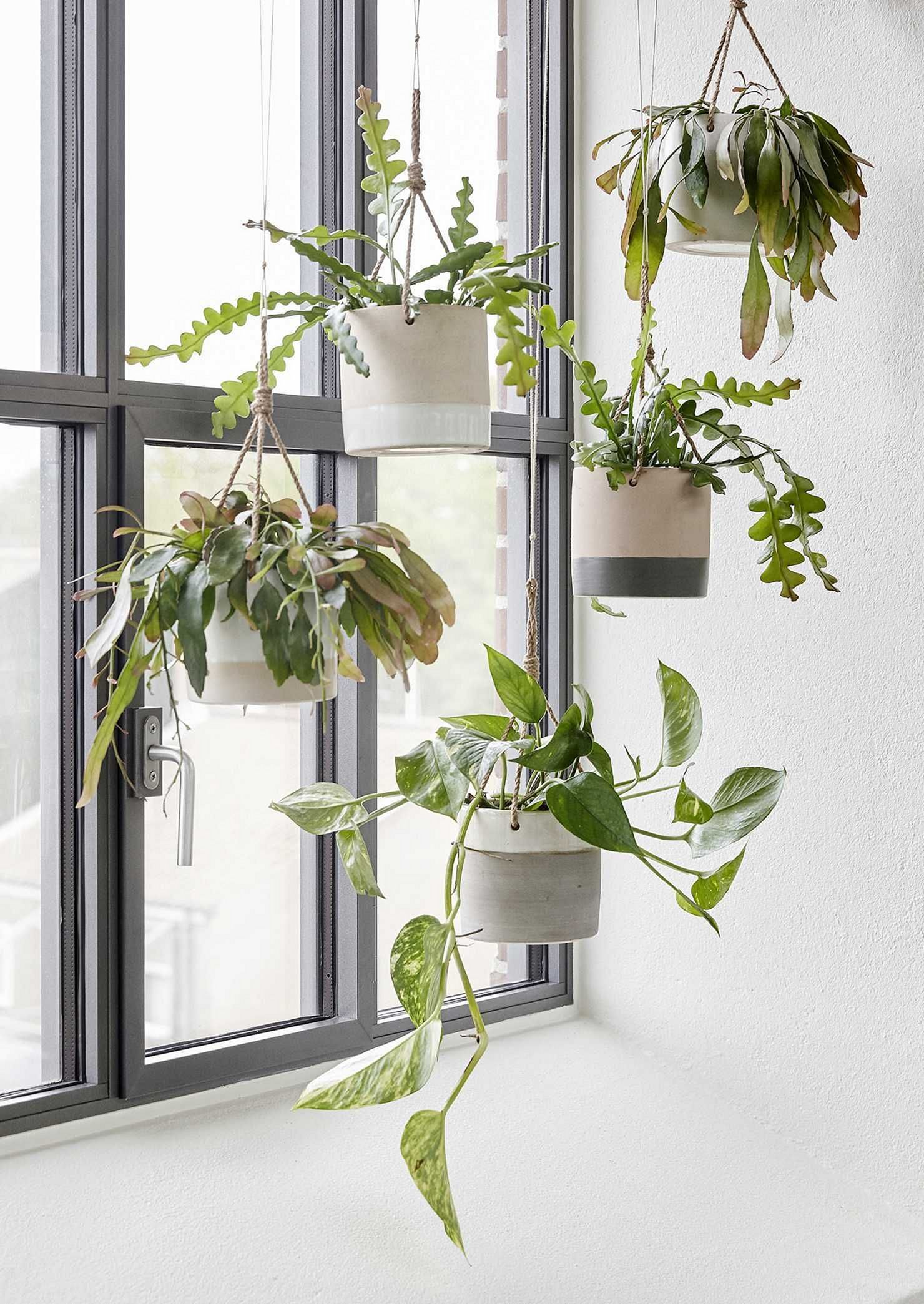 14 Diy Hanging Indoor Plants Design Ideas In 2020 Hanging Plants Indoor Hanging Plants Diy Hanging Planter