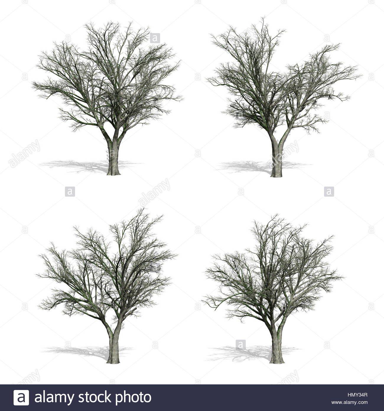 Elm fák abf7687688