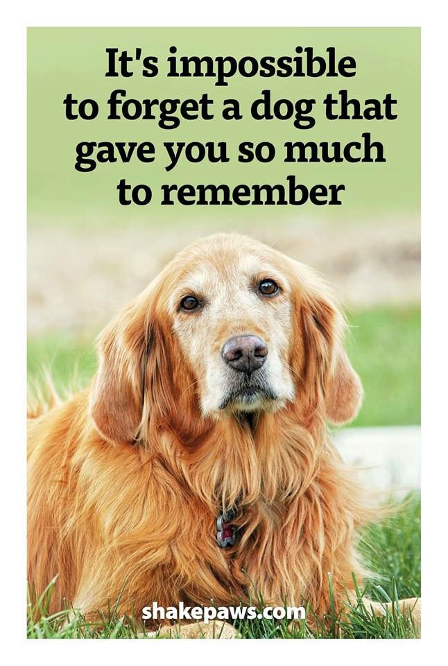 It S Impossible To Forget A Dog That Gave You So Much To Remember