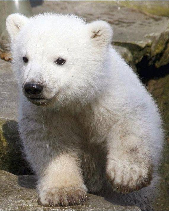 Do you have enough onesies for summer?  Baby Polar Bear Cotton Onesie, $6.50