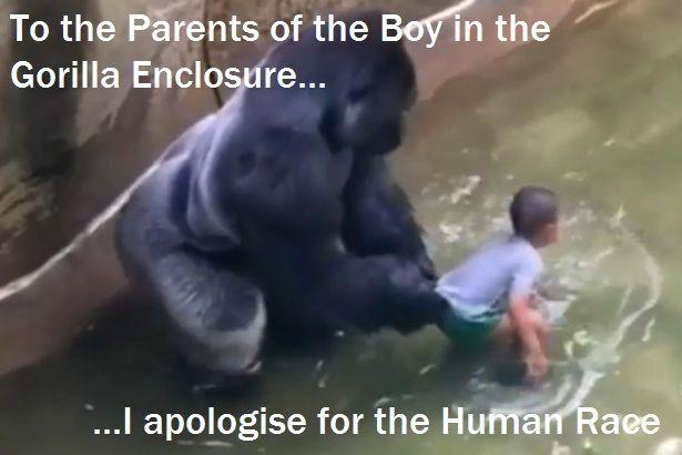 #RIPHarambe #CincinnatiZoo #Gorilla #VictimShaming