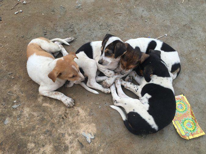 Perros sin dueño alrededor del mundo – Español