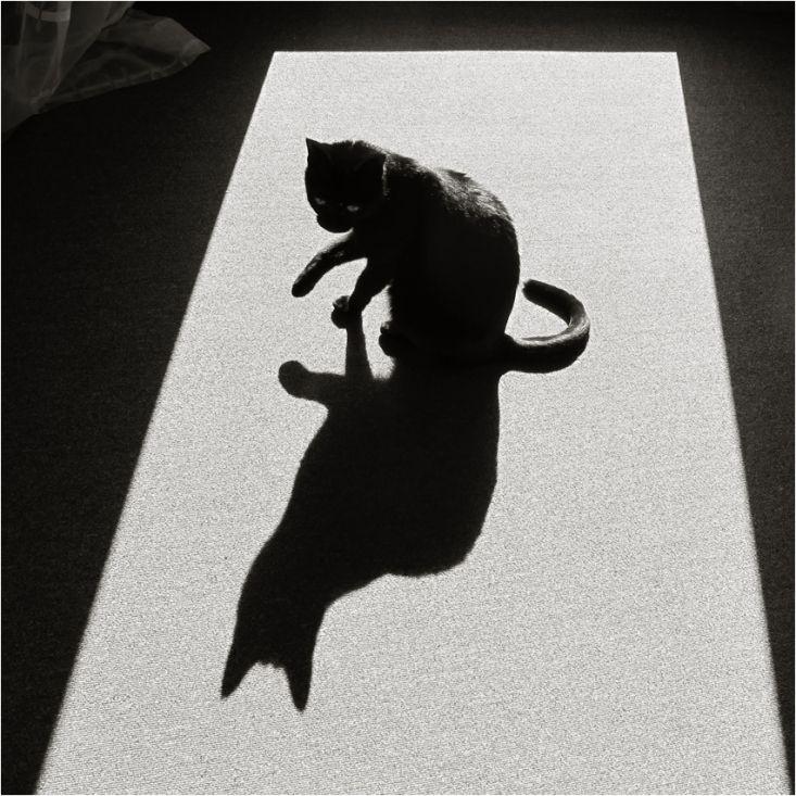 фотосессия с теневым рисунком призналась, что тяжело
