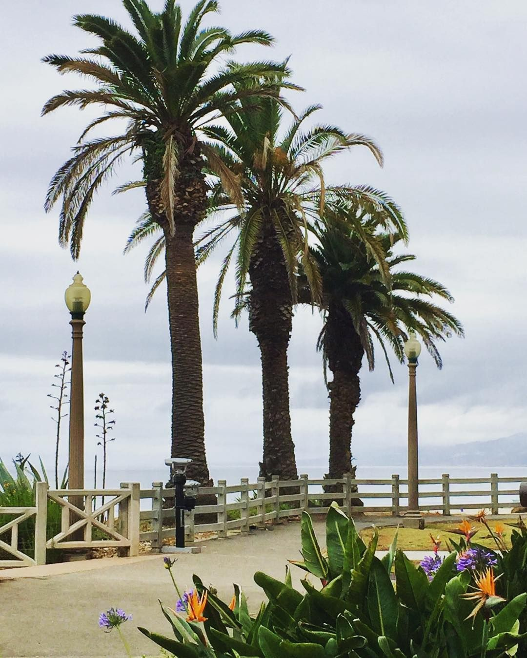 Even on a cloudy morning I love #PalisadesPark in  #SantaMonica!   #southerncalifornia #palmtrees #walkingpath #oceanview #oceanbreeze #socallifestyle