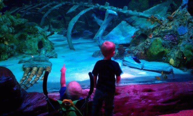 Toddler Tuesdays at LEGOLAND Discovery Center and SEA LIFE Aquarium ...