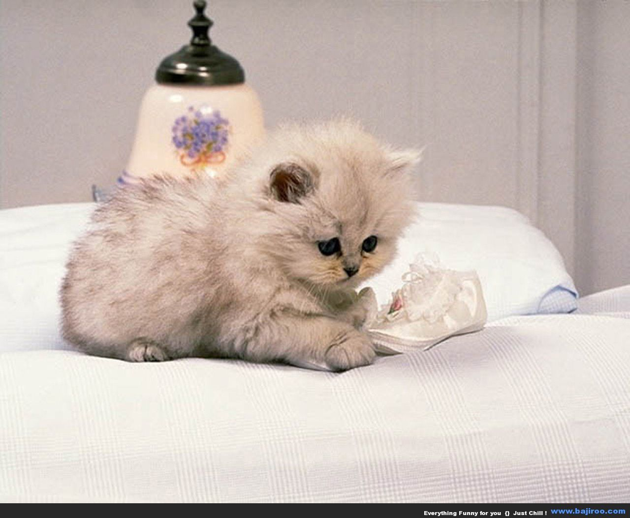 Random Collection Of 35 Cute Persian Cats Kitten Wallpaper Cute Cat Wallpaper Kittens Cutest