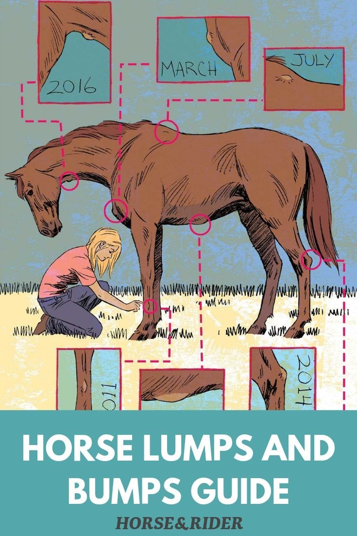 Your Horse S Lumps Bumps Horse Care Horse Health Horses