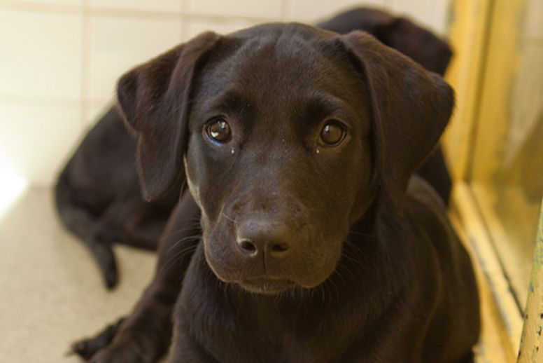 Pedigree Puppy Chow Feeding Guide 2021