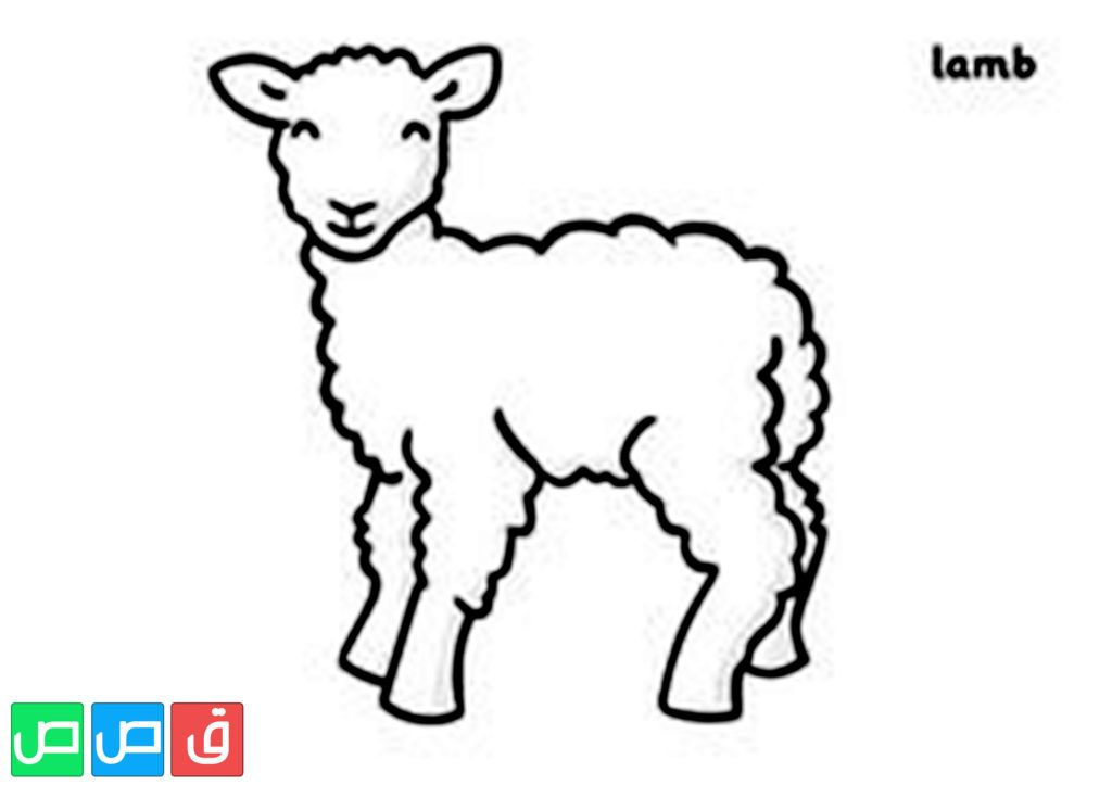 رسم خروف للتلوين In 2020 Spring Lambs Coloring Pages Lamb