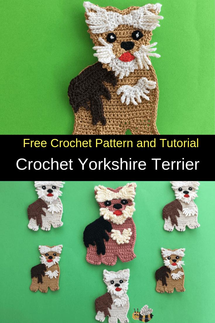 Yorkshire terrier | 1102x735