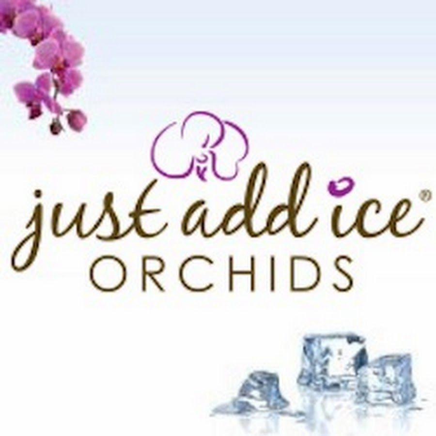 Phalaenopsis Orchid Care Repotting Tips Watering Information And Much More From Just Add Ice Orchids Phalaenopsis Orchid Care Orchid Care Phalaenopsis Orchid