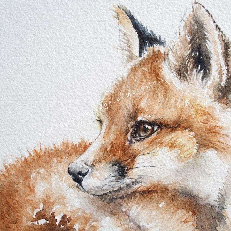 Renard Aquarelle Details Peinture Renard Loup Aquarelle Et