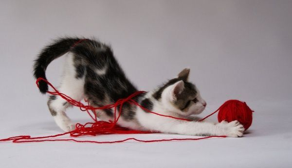kitten playing with a ball of yarn. | Crochet and Cats ...