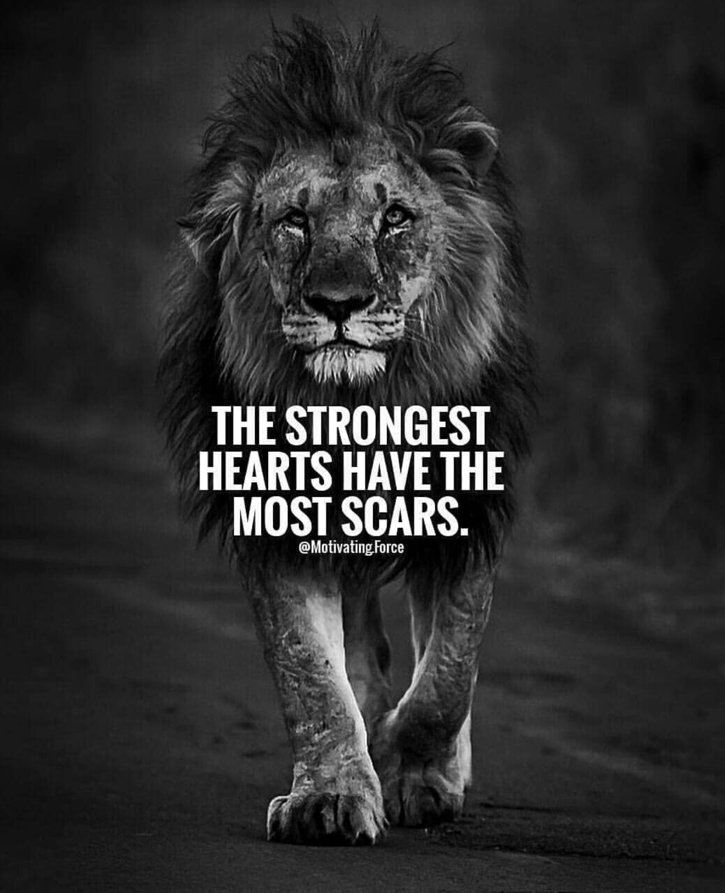 The Strongest Hearts Have The Most Scars — Steemit