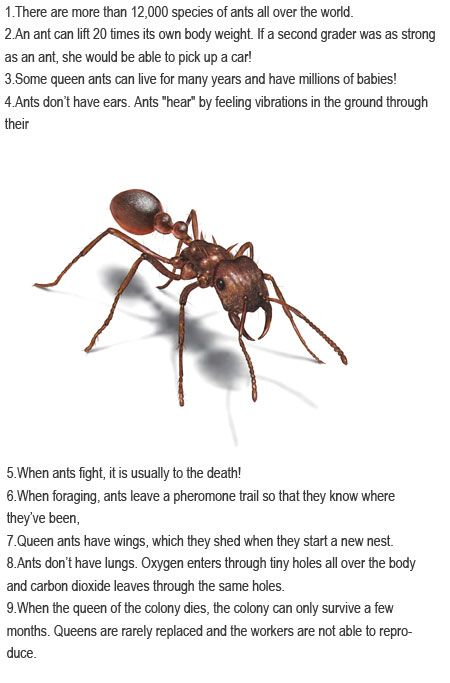 facts about ants for kids httpfirstchildhoodeducationblogspotcom2013