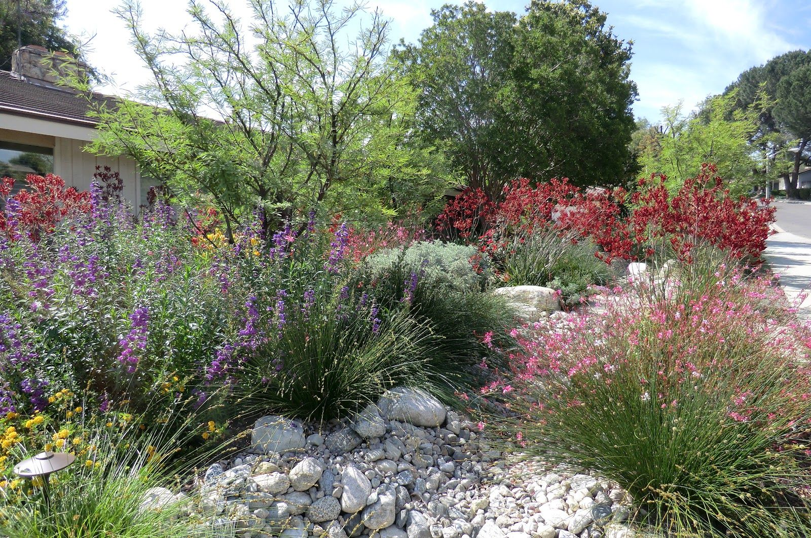 California native plant gardening and landscaping have tremendous