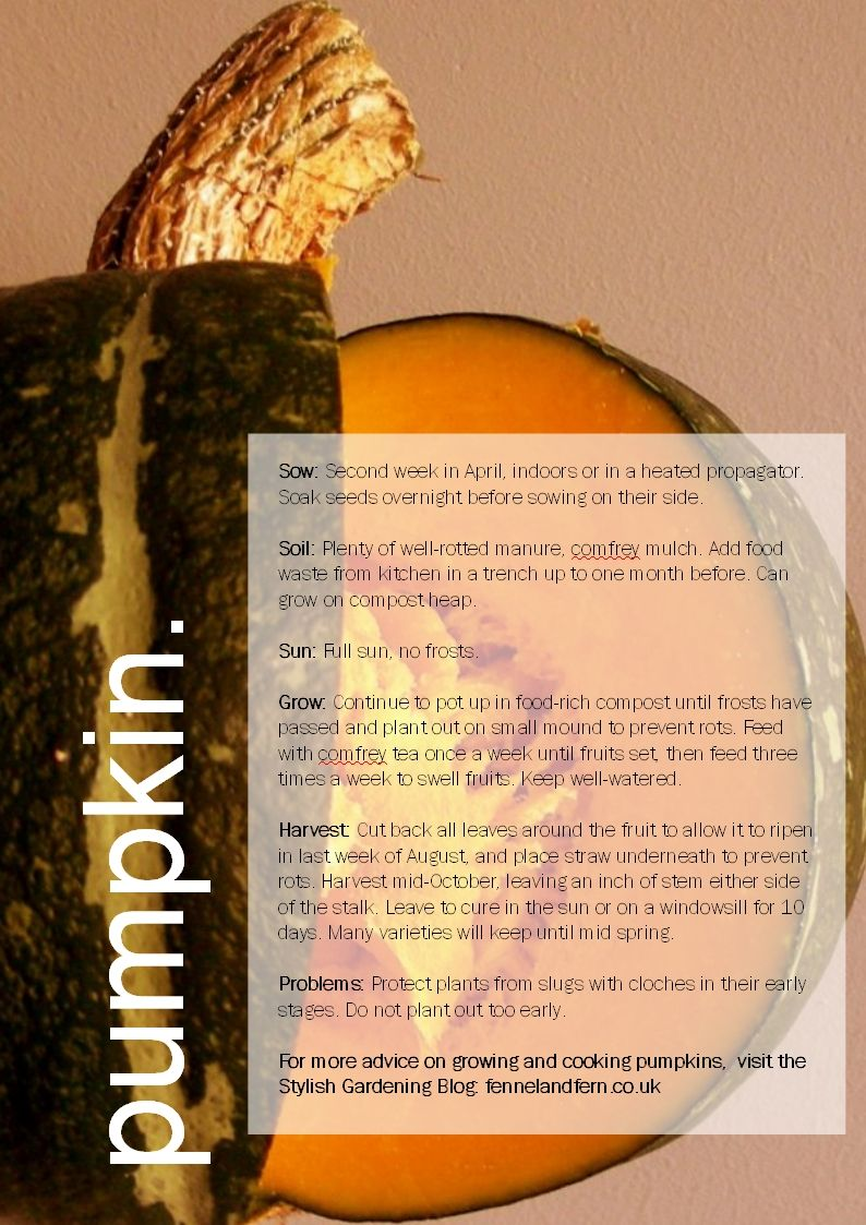 how to grow pumpkin at home