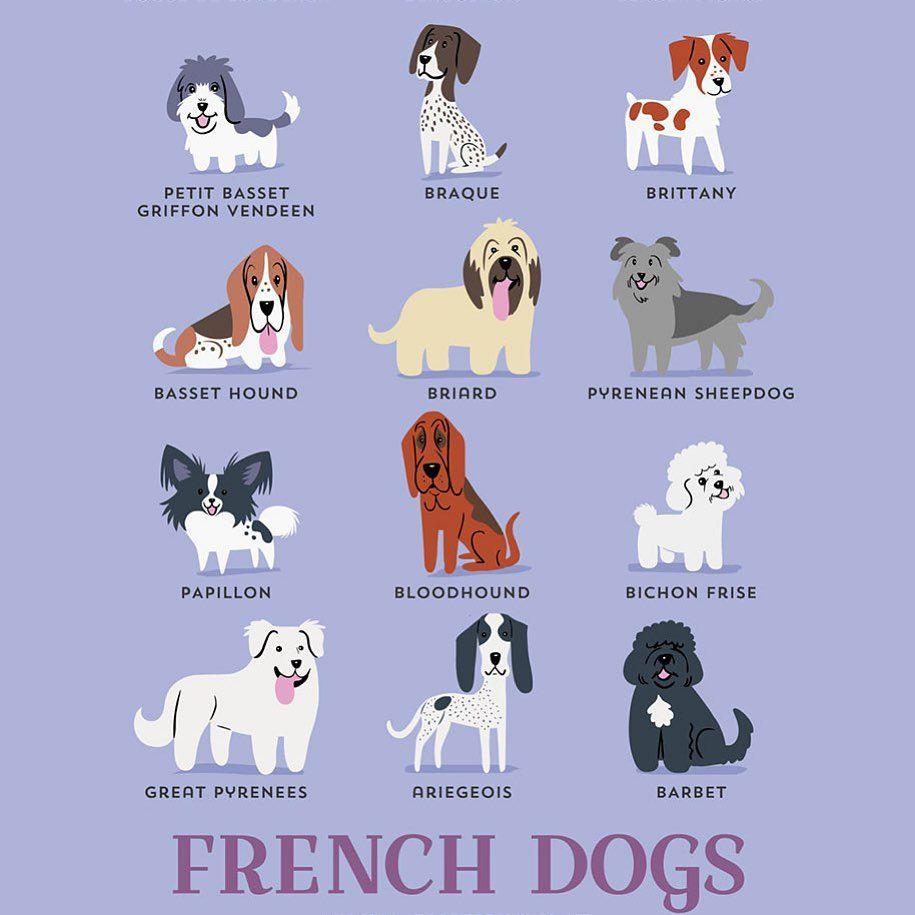 Dogs Doglovers Dogcommunity Dogcartoons Lovedogs Doggy Allthingsdogs Dogslife Dogblog Dogblogger 4theloveofdogs French Dogs Dog Breeds Chart French Dog Breeds