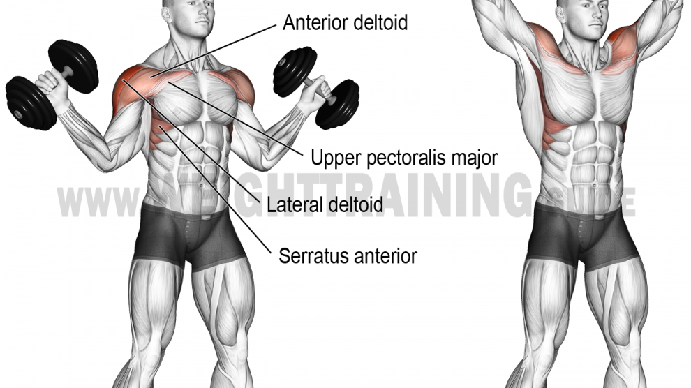 Dumbbell Scott press exercise instructions and videos