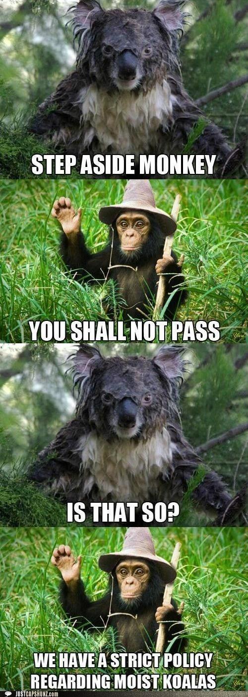 https://i.chzbgr.com/maxW500/5463922176/h8E9EC6D4/ | Funny ...  Funny Koala Memes