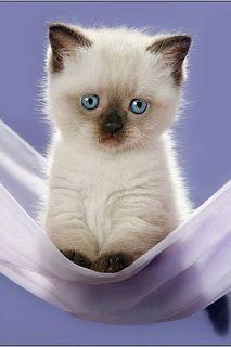 Imagem De Gatos Por Kullayapa Srimaserm Em น องแมว Gatinhos Fofos Animais Bebes Mais Fofos