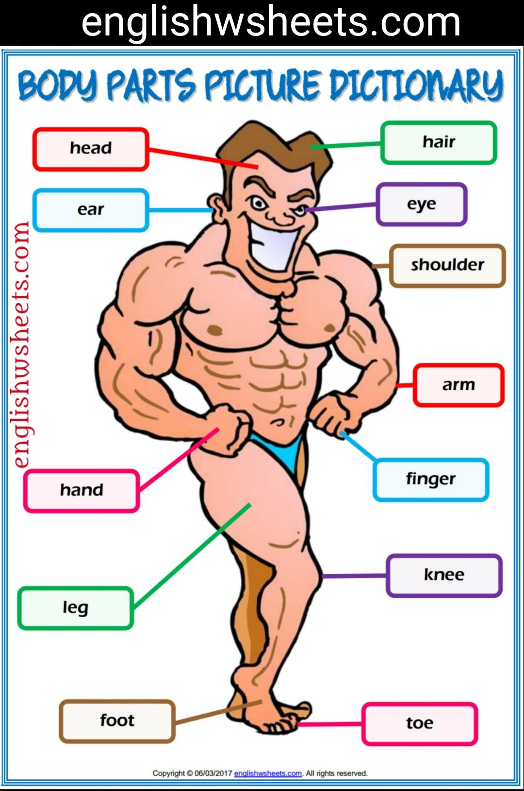 Body Parts Esl Printable Picture Dictionary For Kids Body