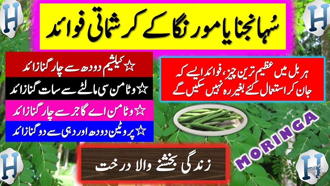 Health Benefits Of Moringa Sohanjna Recipe In Urdu