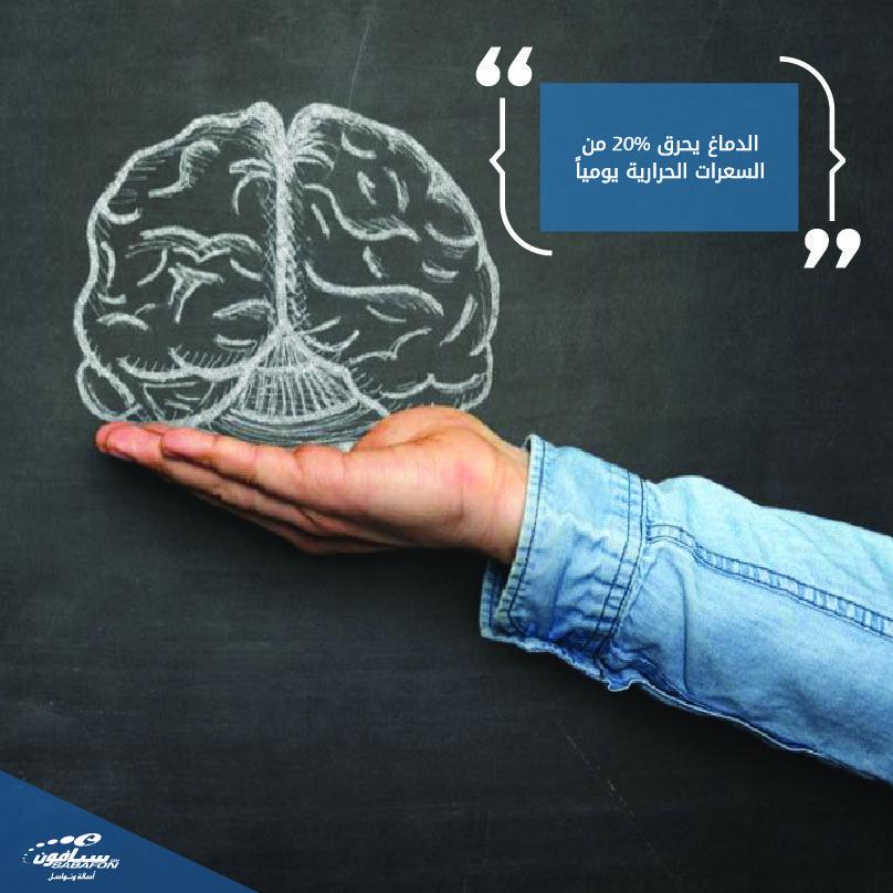 الدماغ أقوى عنصر في جسم الانسان فقوة أدائه تجعله يحرق 20 من السعرات الحرارية اليومية بالرغم من أنه لا يتعدى حجمه 5 من الجسم هل تعلم Losi Fashion
