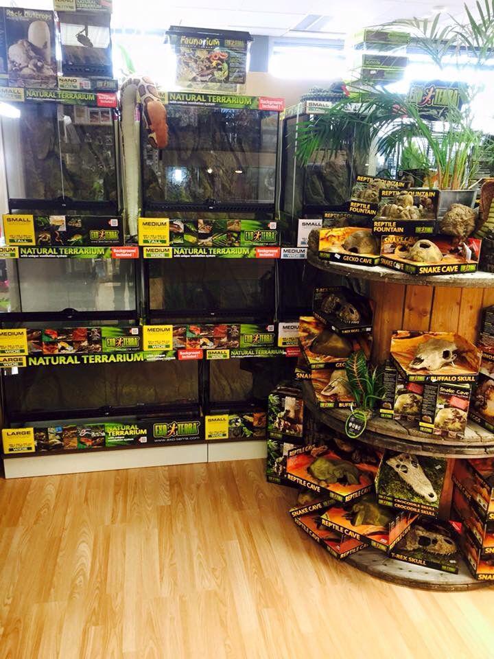 Reptile Shop Display Reptile Shop Reptile Pet Store Pet Store Display
