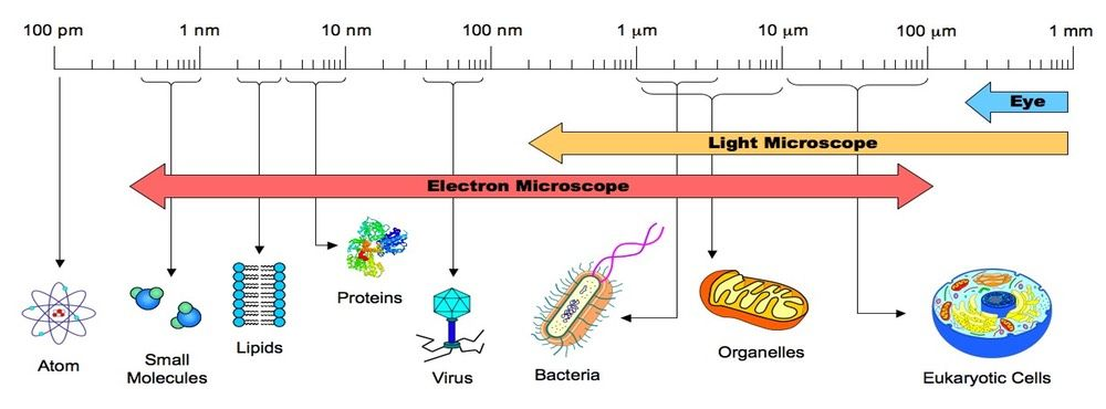 micrometer nanometer infographic google search biology