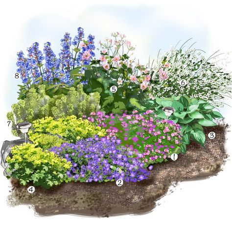 Projet am nagement jardin les vivaces fleuries au jardin parterre jardin massifs astuces - Plantes vivaces fleuries ...