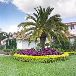 Palm Tree Landscaping Ideas Palm Trees Landscaping Tropical