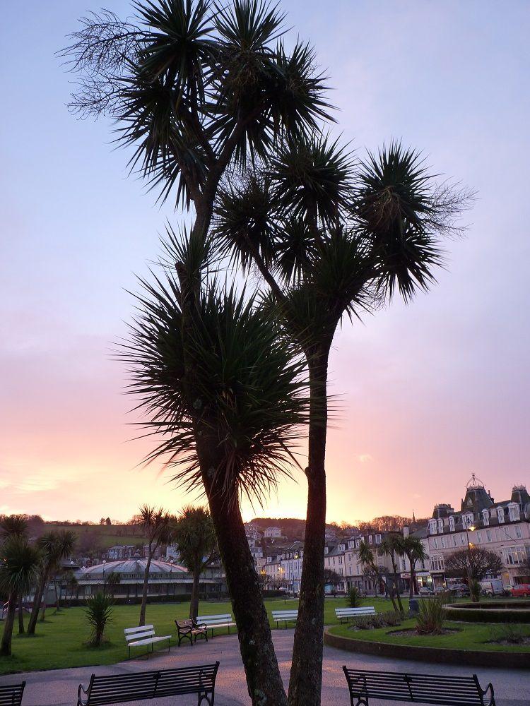 Palm tree, Isle of Bute, Scotland ( explore your biking wanderlust