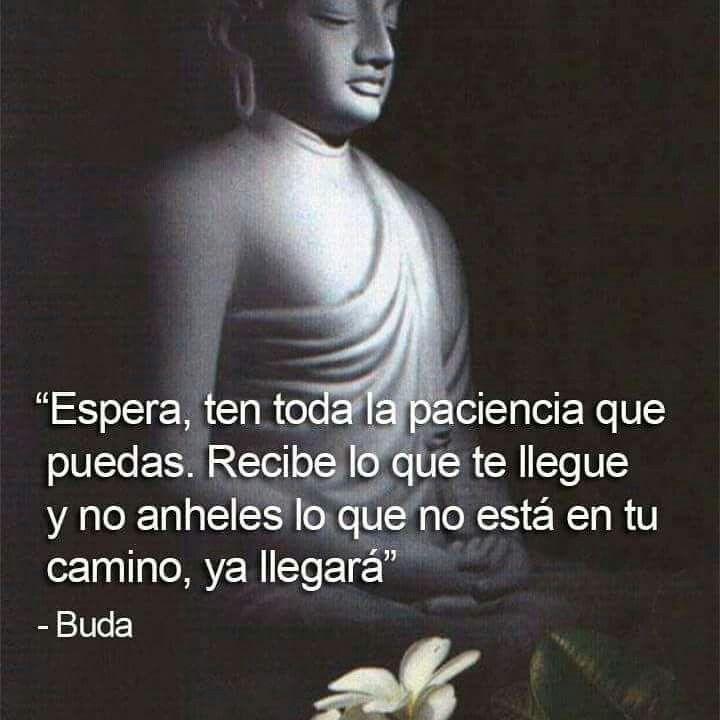 Frases Tina Buda Pinterest Esoterik