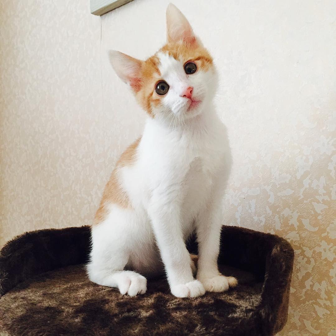 우리 카레 #인생샷 이제는 캣타워에 꽉 들어차는 고양이 #카레냥 #냥스타그램 #캣스타그램 #펫스타그램 #고양이 #아깽이 #캣초딩 #반려묘 #맞팔 #일상 #소통 #daily #instagram #instacat #cat #catstagram #catsofinstagram #kitty #cat #kitten #kittensofinstagram by lovely_curry