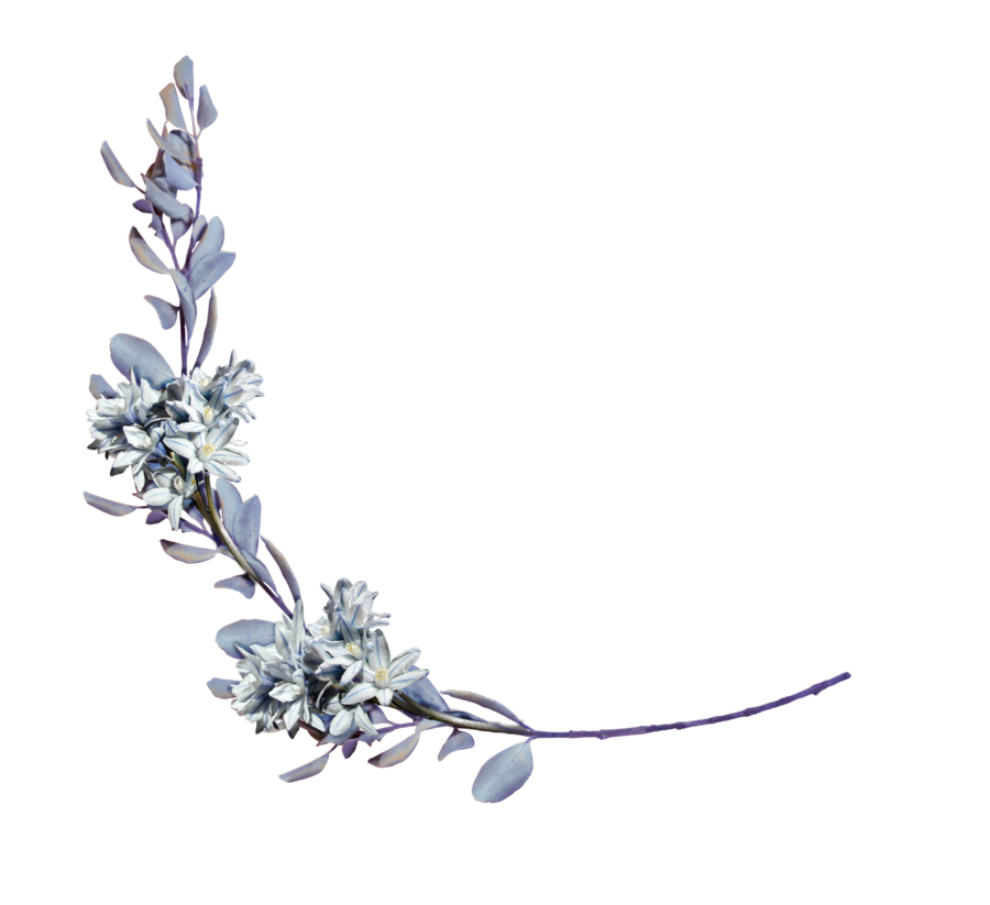 hyacinths with a laurel branch png by Amalus on DeviantArt