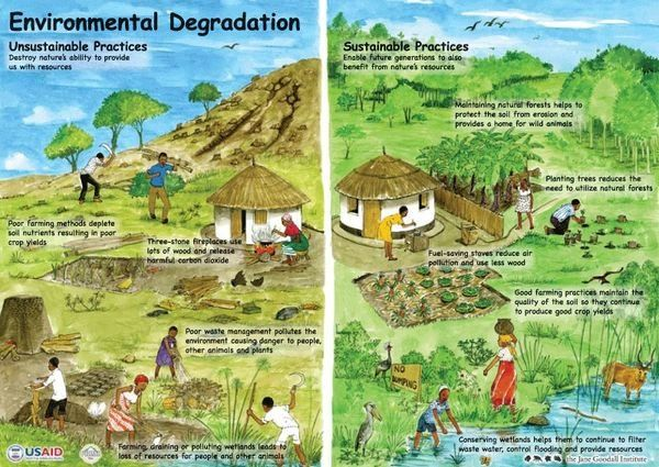 Importance of Plants Poster | Environmental Education Aids ...