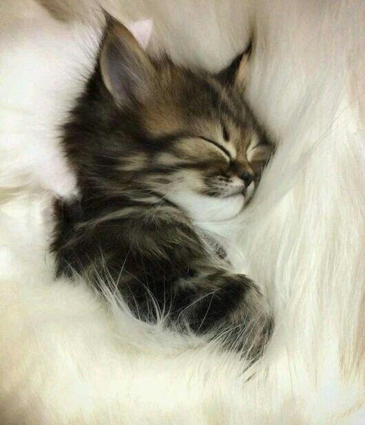 Happy sleeping kitten..... Cute animals