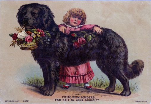 Prof Field S Worm Powder Victorian Trade Card Work With Animals Interesting Animals Newfoundland Dog