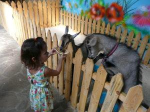 خلفيات اطفال تجنن 2020 بنات واولاد كيوت خلفيات اطفال جميلة للموبايل 10 Goats Animals