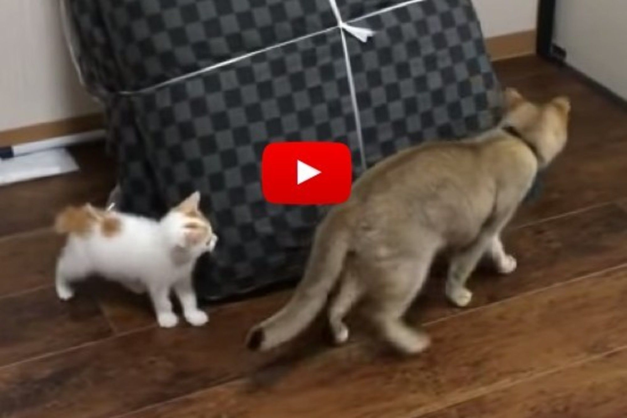 A tiny kitten is playing tag with a bigger kitty. The ending is too cute.
