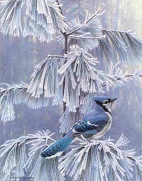 frosty morning