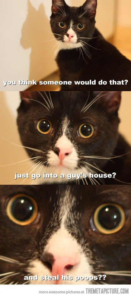 Every time I clean out the litter box.. my 3 babies think this every day.