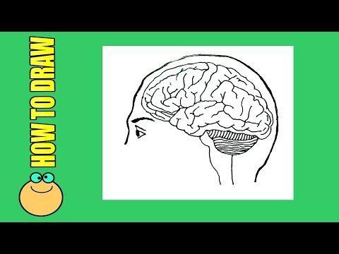 How to draw Brain diagram easily,Simple brain diagram ...