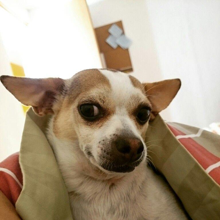 Seguro que quieres levantarte?