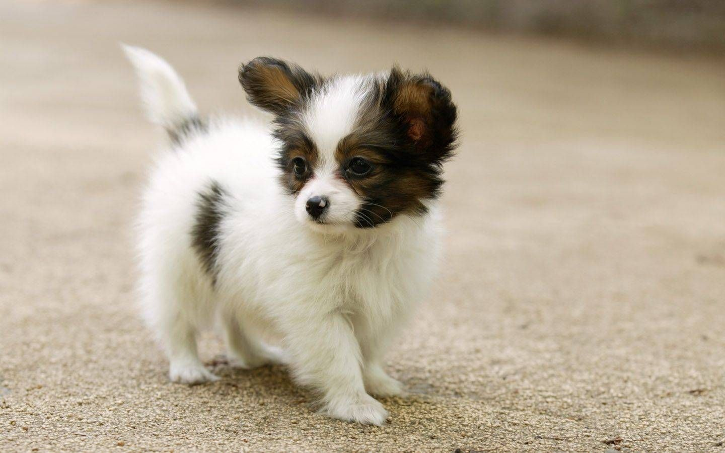 Really Cute Dog Breeds