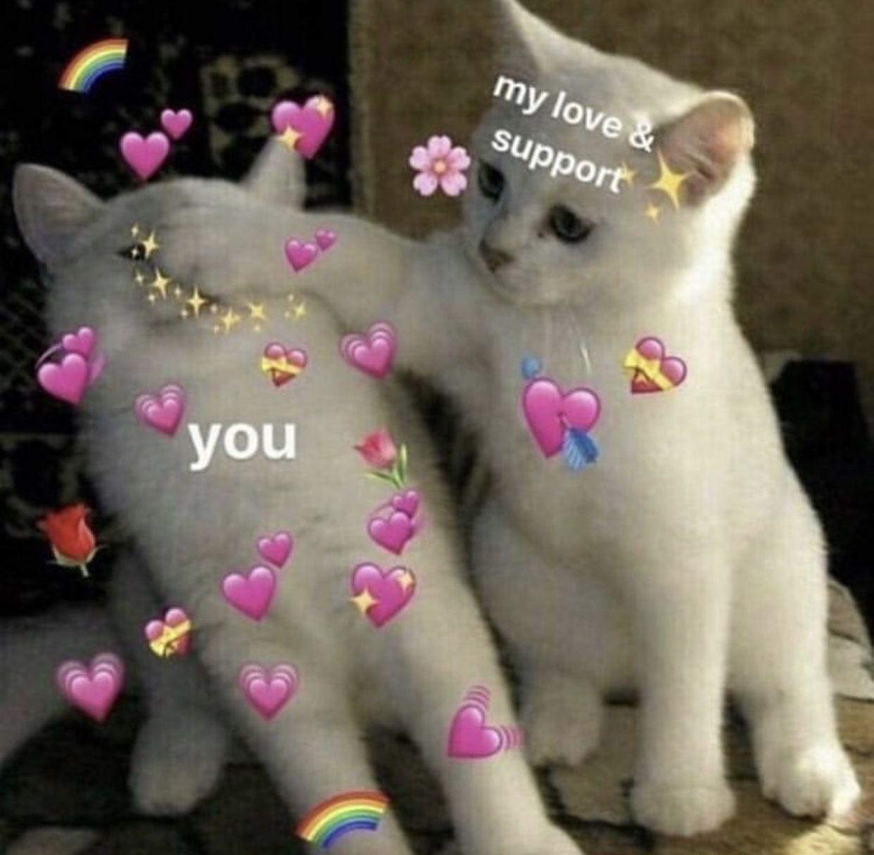 Imagen Relacionada Cute Love Memes Love You Meme Cute Cat Memes