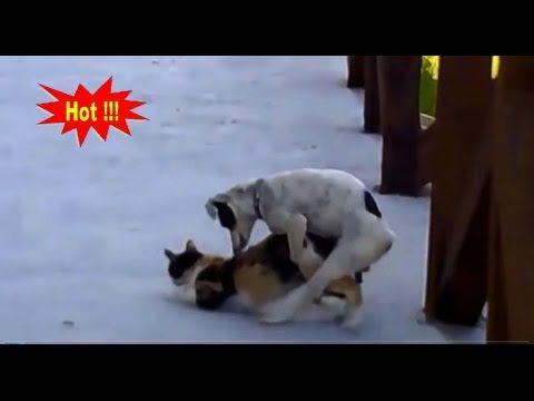 Dog Mating  Clip Dog Funny Y Girl