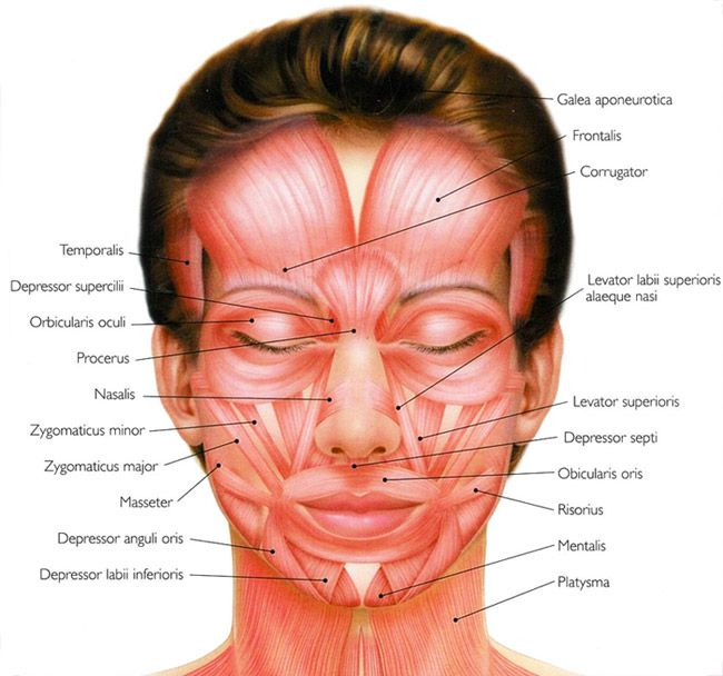 facial muscles and massage